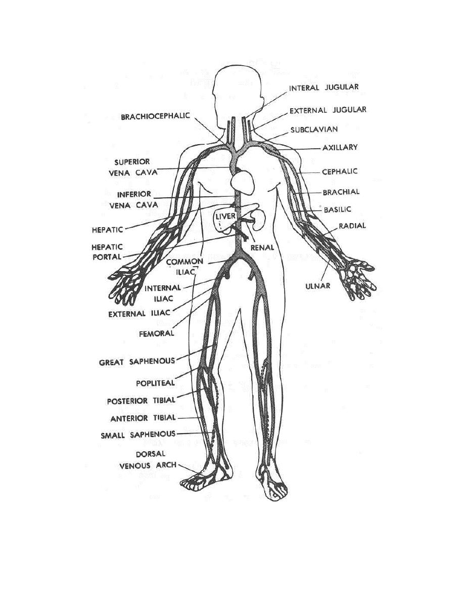 anatomy-coloring-page-0020-q1