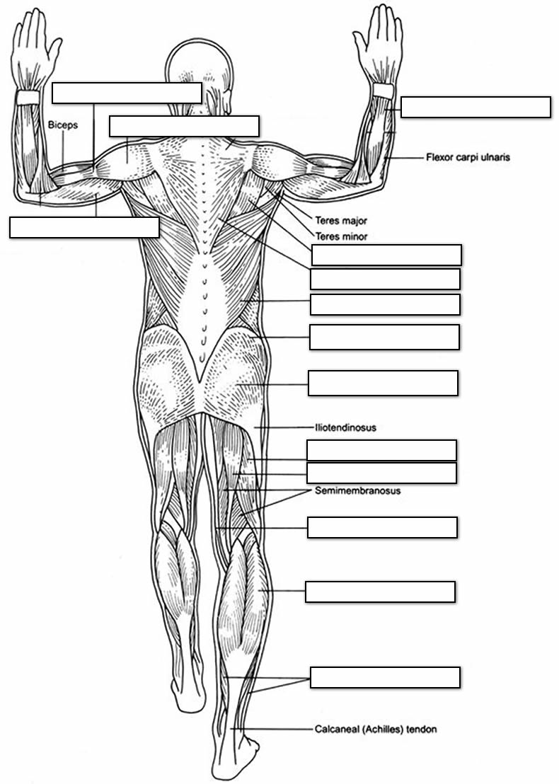 anatomy-coloring-page-0022-q1