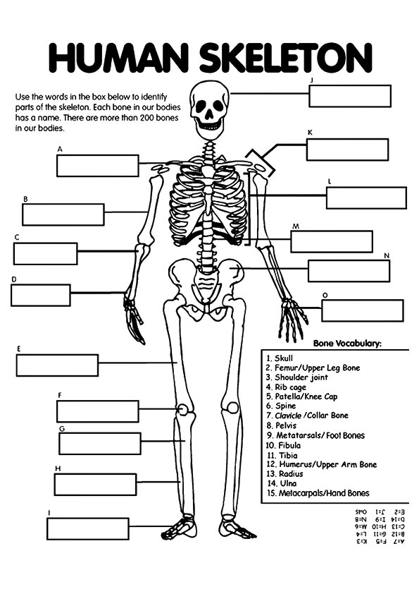 anatomy-coloring-page-0026-q2