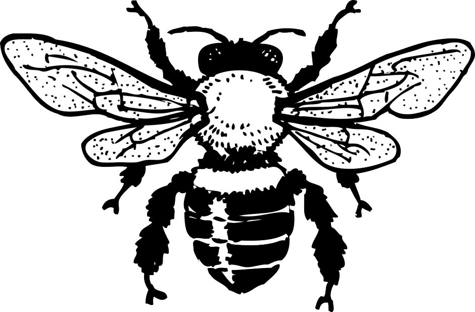- ▷ Bee: Coloring Pages & Books - 100% FREE And Printable!