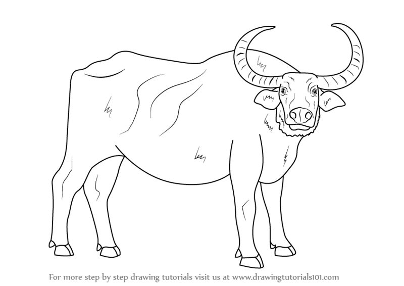 buffalo-coloring-page-0016-q1