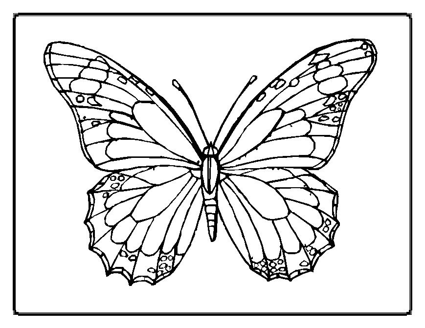 bug-coloring-page-0021-q1