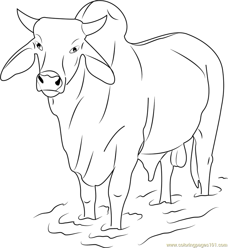 bull-coloring-page-0007-q1