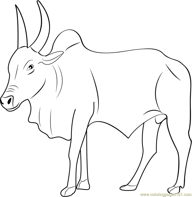 bull-coloring-page-0012-q1