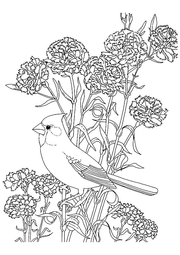 Cardinal Coloring Pages Books 100 Free And Printable