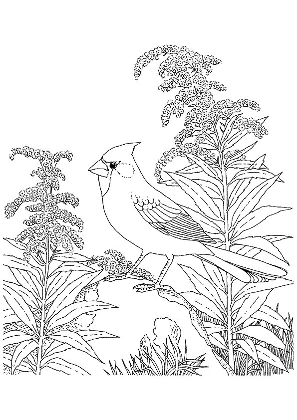 cardinal-coloring-page-0002-q2