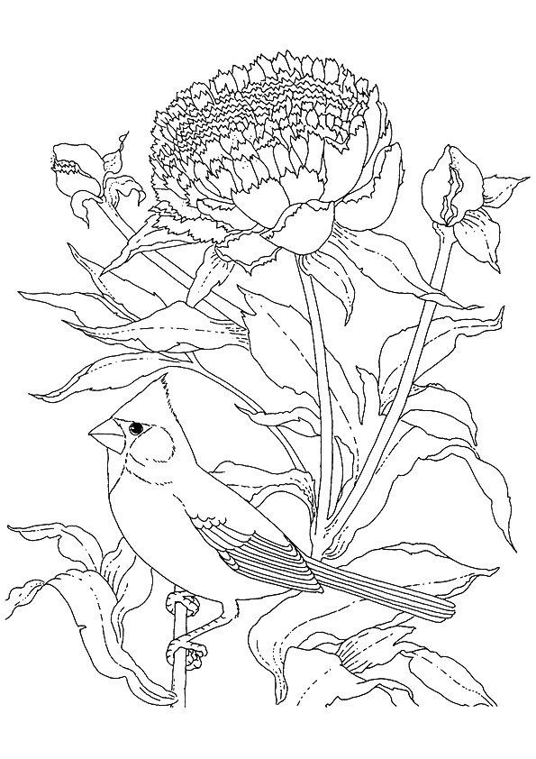 cardinal-coloring-page-0004-q2