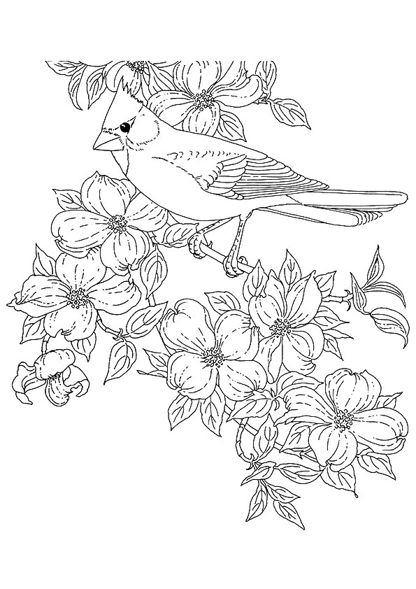 cardinal-coloring-page-0005-q2