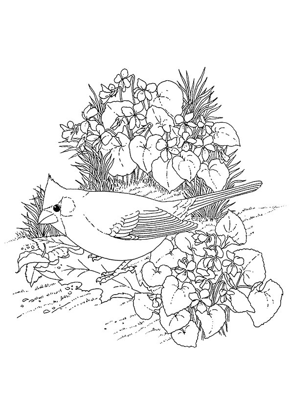 cardinal-coloring-page-0006-q2