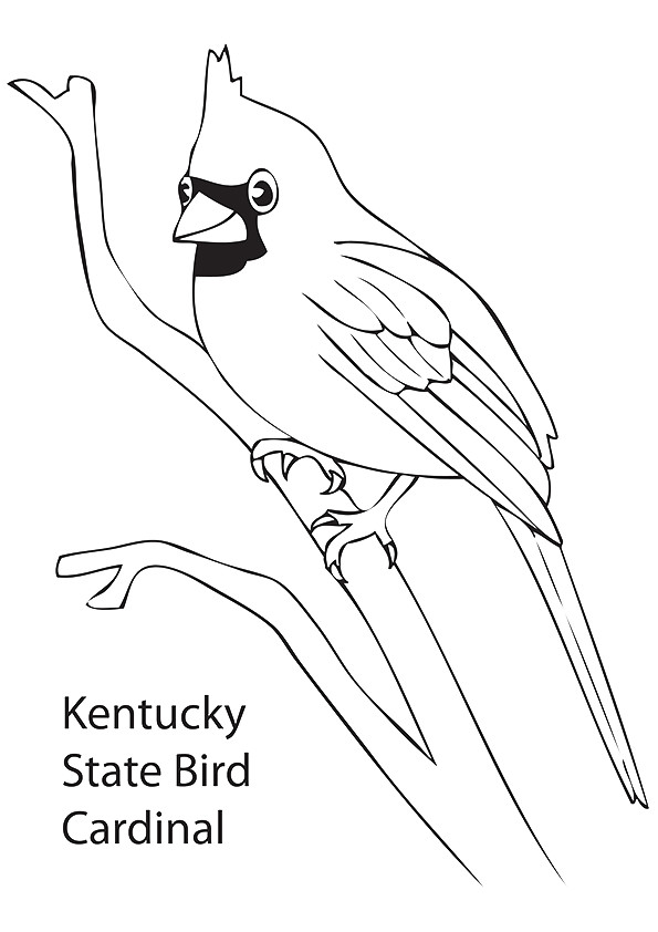 cardinal-coloring-page-0008-q2