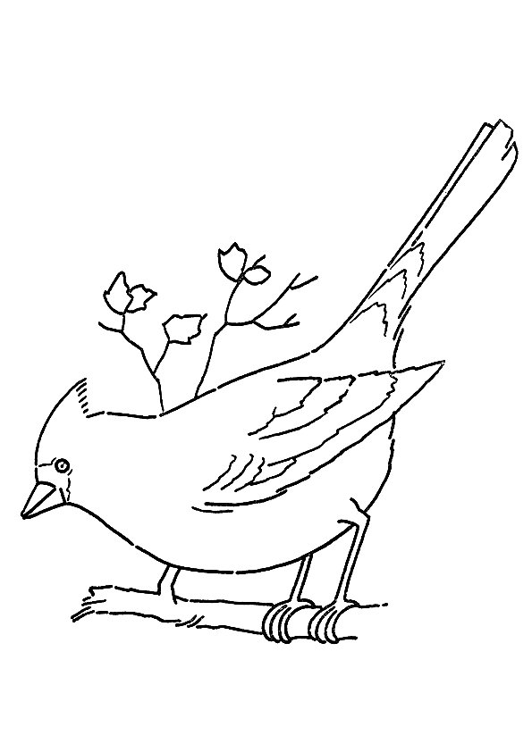 cardinal-coloring-page-0011-q2
