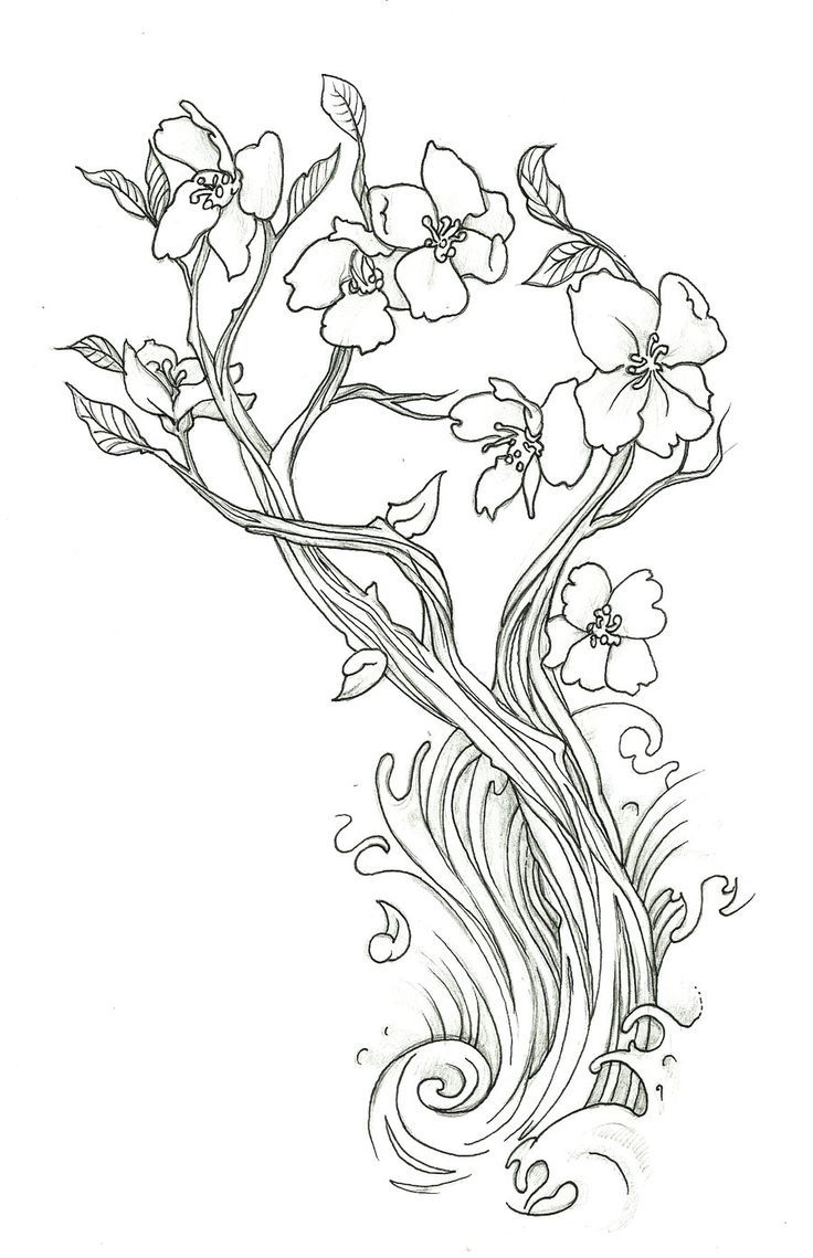 cherry-coloring-page-0009-q1