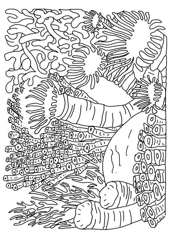 coral-coloring-page-0005-q2