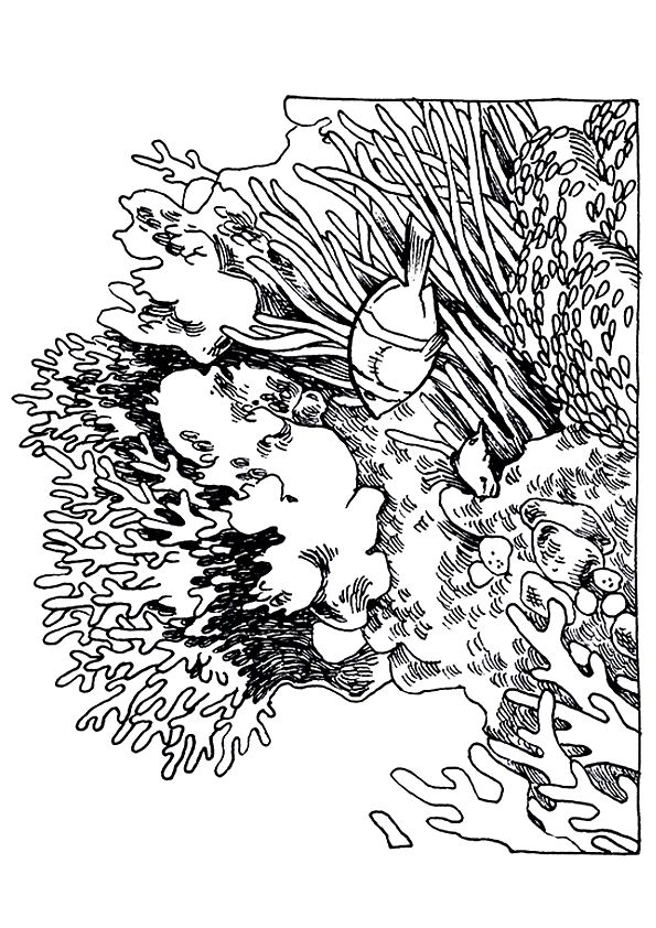 coral-coloring-page-0007-q2