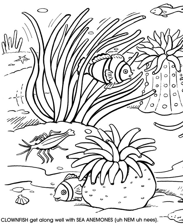 coral-coloring-page-0011-q1