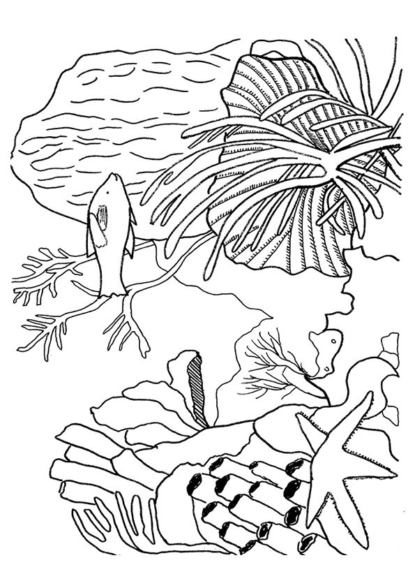 coral-coloring-page-0013-q2