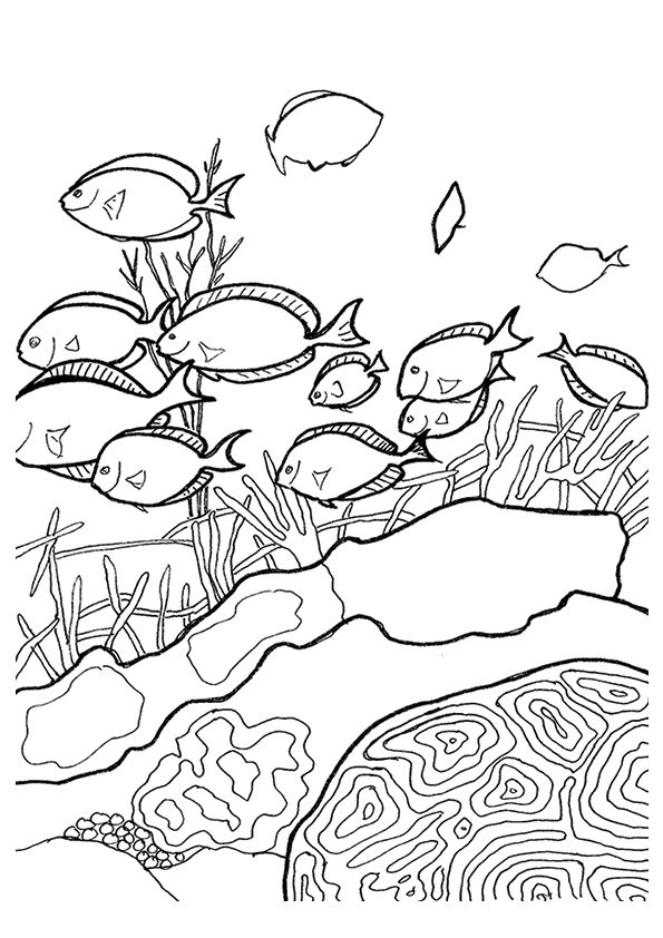 coral-coloring-page-0017-q2