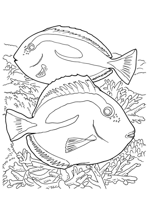 coral-coloring-page-0020-q2