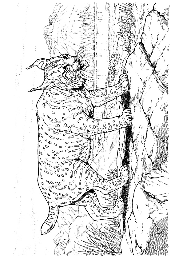 cougar-coloring-page-0001-q2