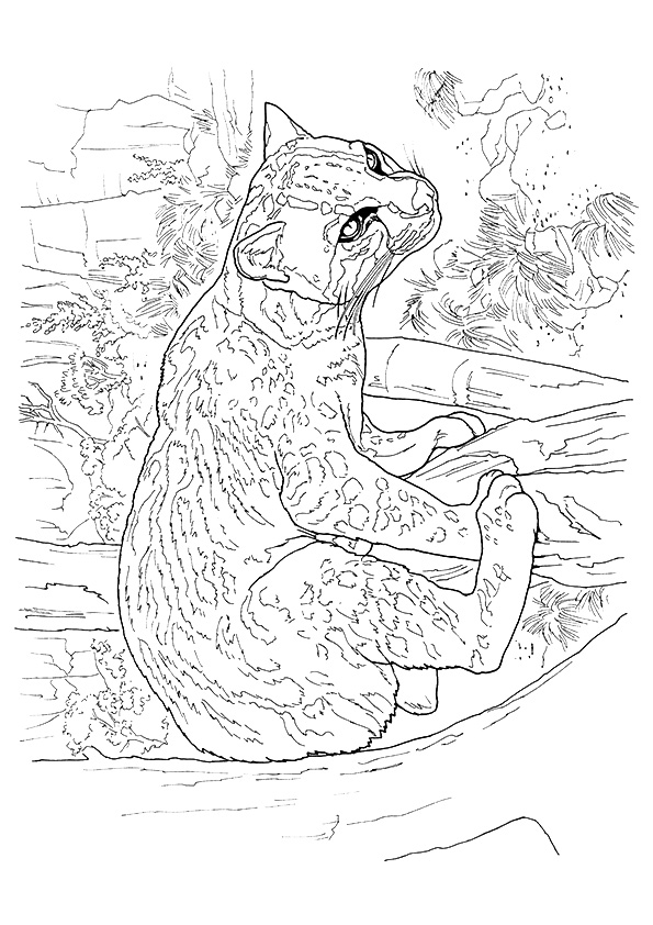 cougar-coloring-page-0002-q2