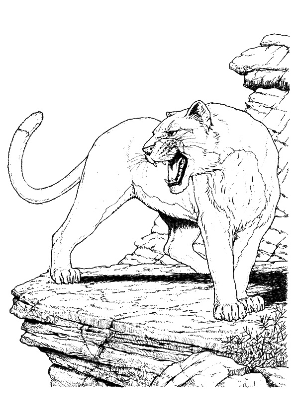 cougar-coloring-page-0003-q2
