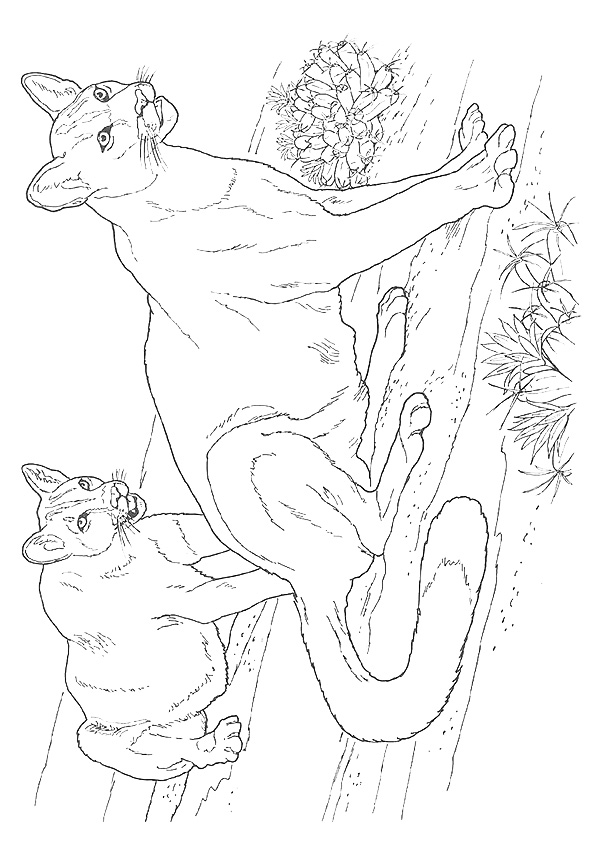 cougar-coloring-page-0005-q2