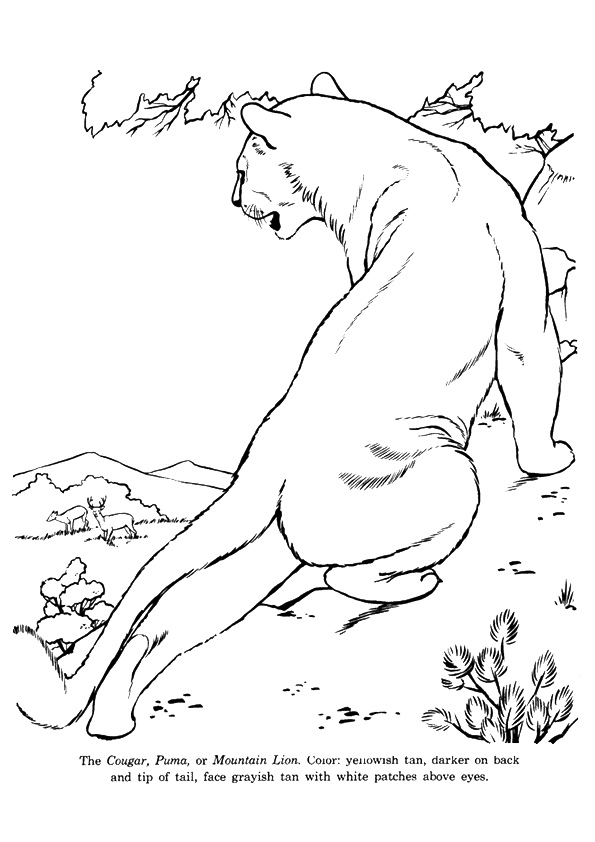 cougar-coloring-page-0006-q2