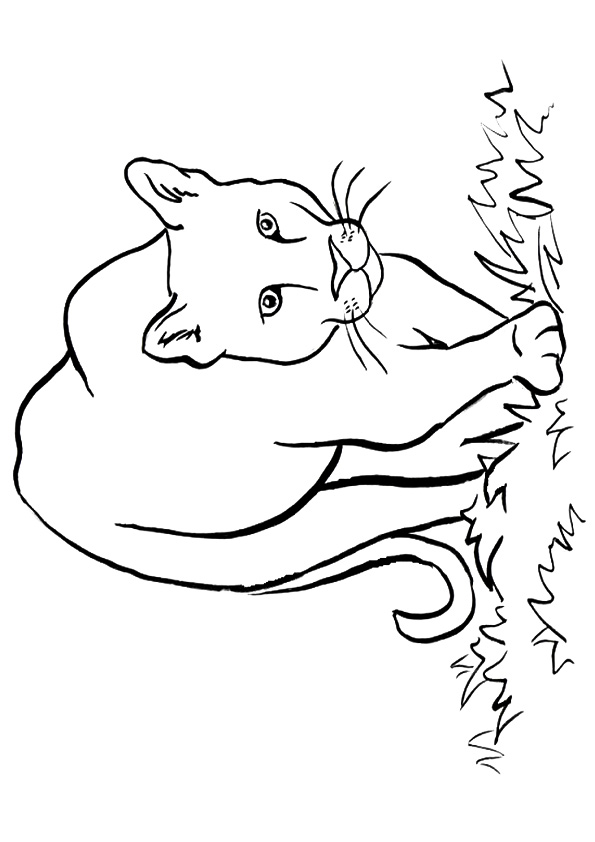 cougar-coloring-page-0007-q2