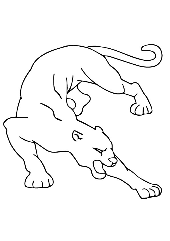 cougar-coloring-page-0010-q2
