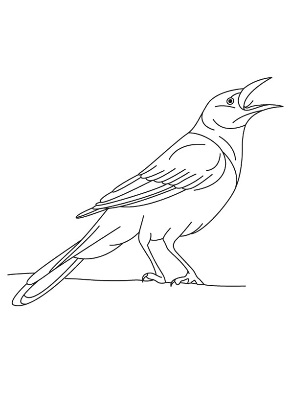crow-coloring-page-0002-q2
