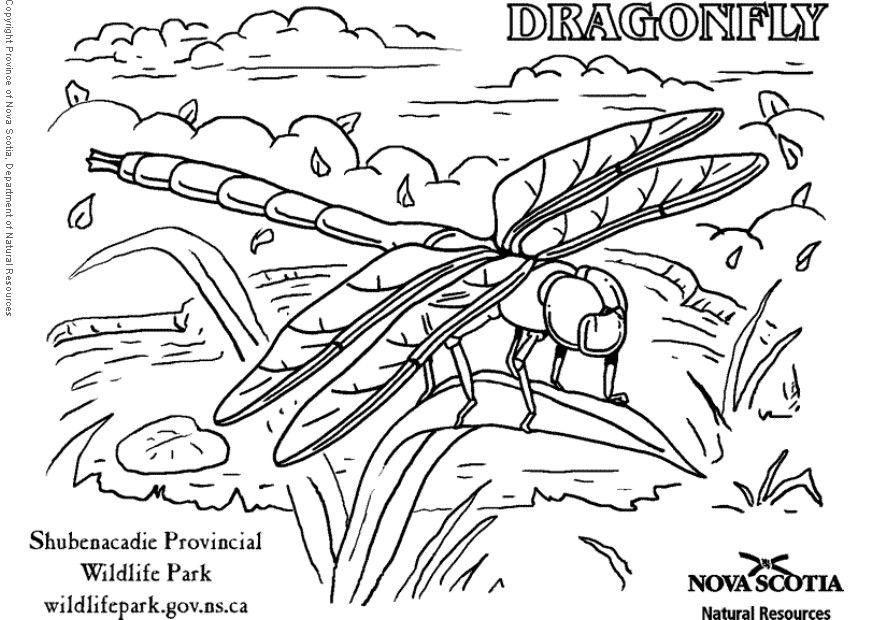 dragonfly-coloring-page-0002-q1