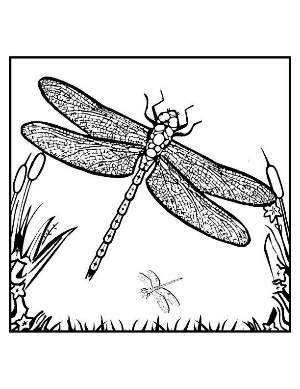 dragonfly-coloring-page-0004-q1