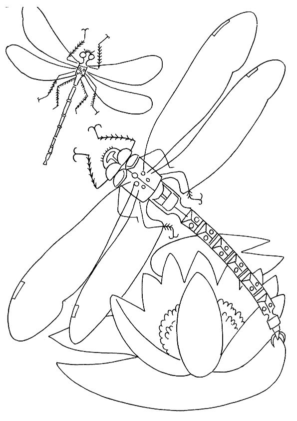 dragonfly-coloring-page-0008-q2