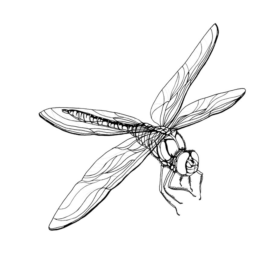 dragonfly-coloring-page-0009-q1