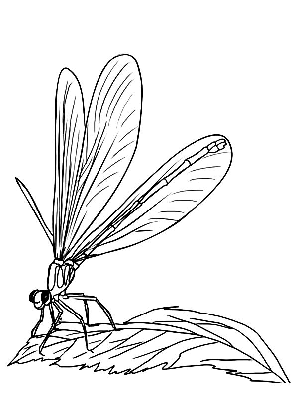 dragonfly-coloring-page-0010-q2