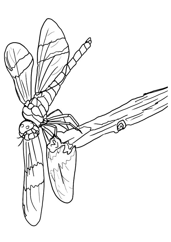 dragonfly-coloring-page-0014-q2
