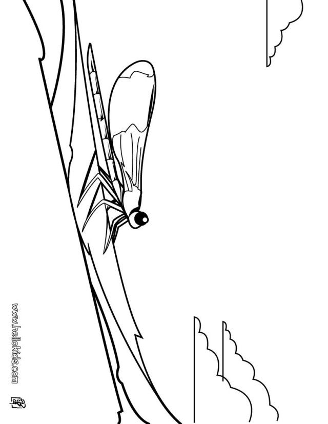 dragonfly-coloring-page-0026-q1