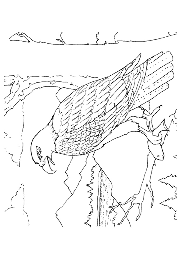 eagle-coloring-page-0002-q2