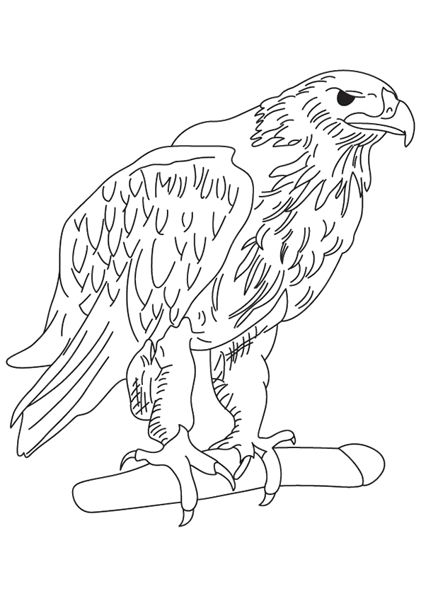 eagle-coloring-page-0003-q2