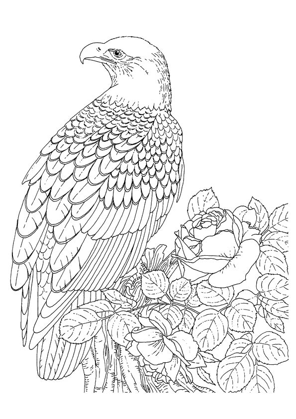 eagle-coloring-page-0005-q2