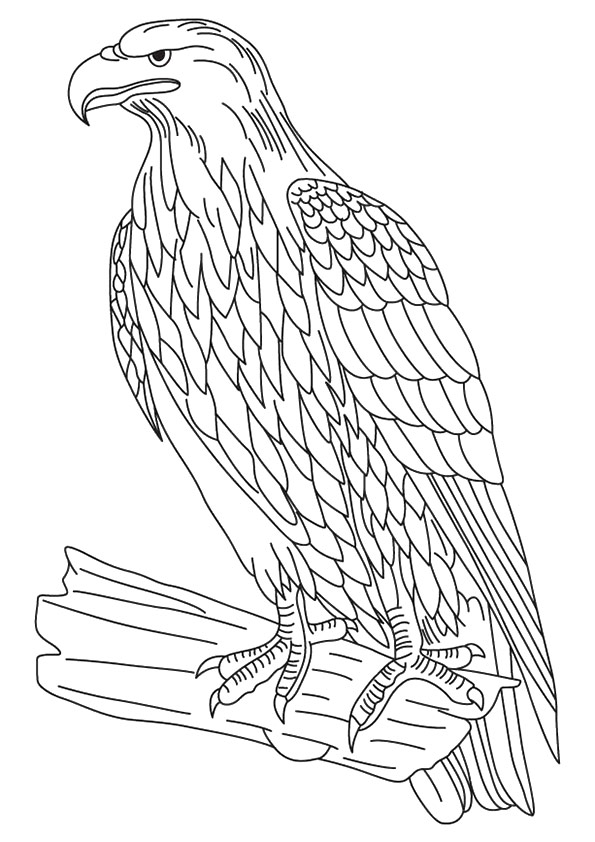 eagle-coloring-page-0008-q2