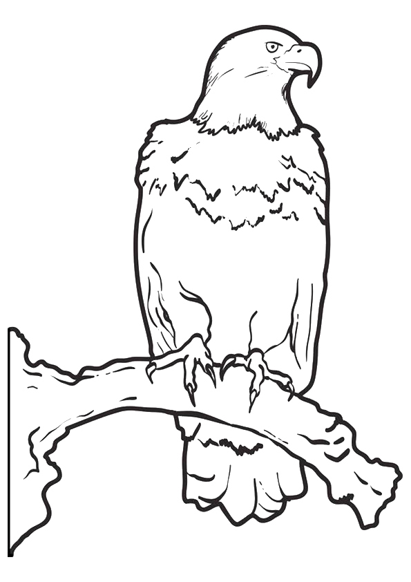 eagle-coloring-page-0012-q2