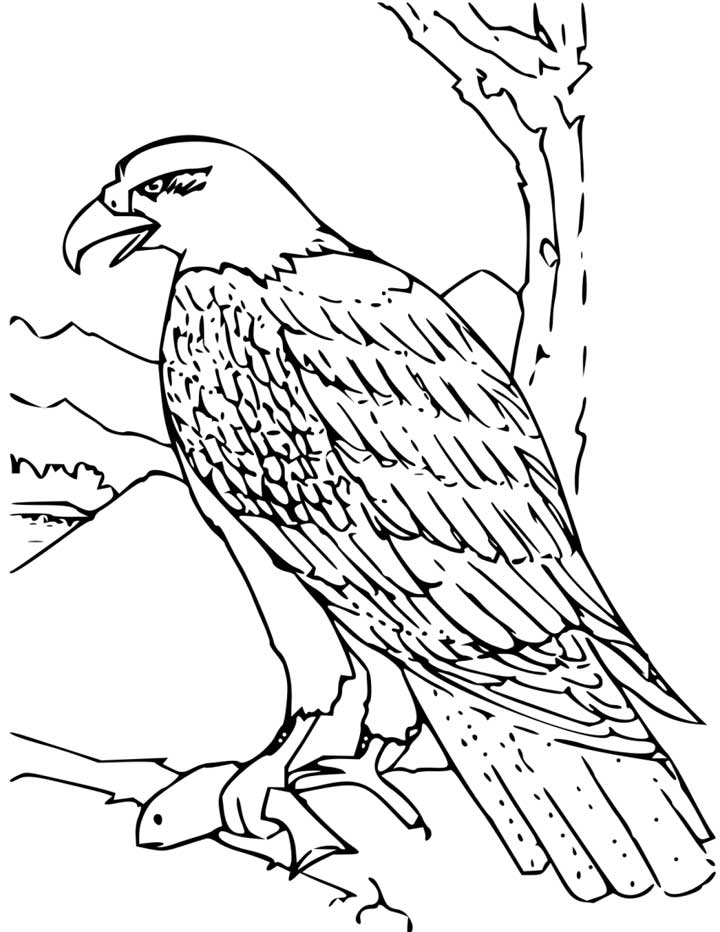 eagle-coloring-page-0016-q1