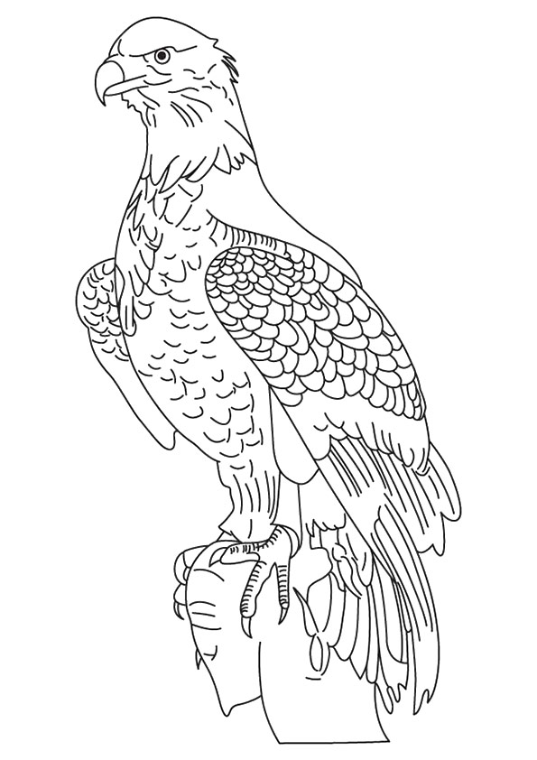 eagle-coloring-page-0018-q2