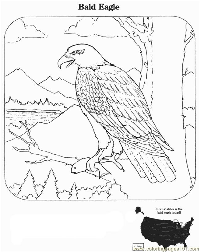 eagle-coloring-page-0019-q1