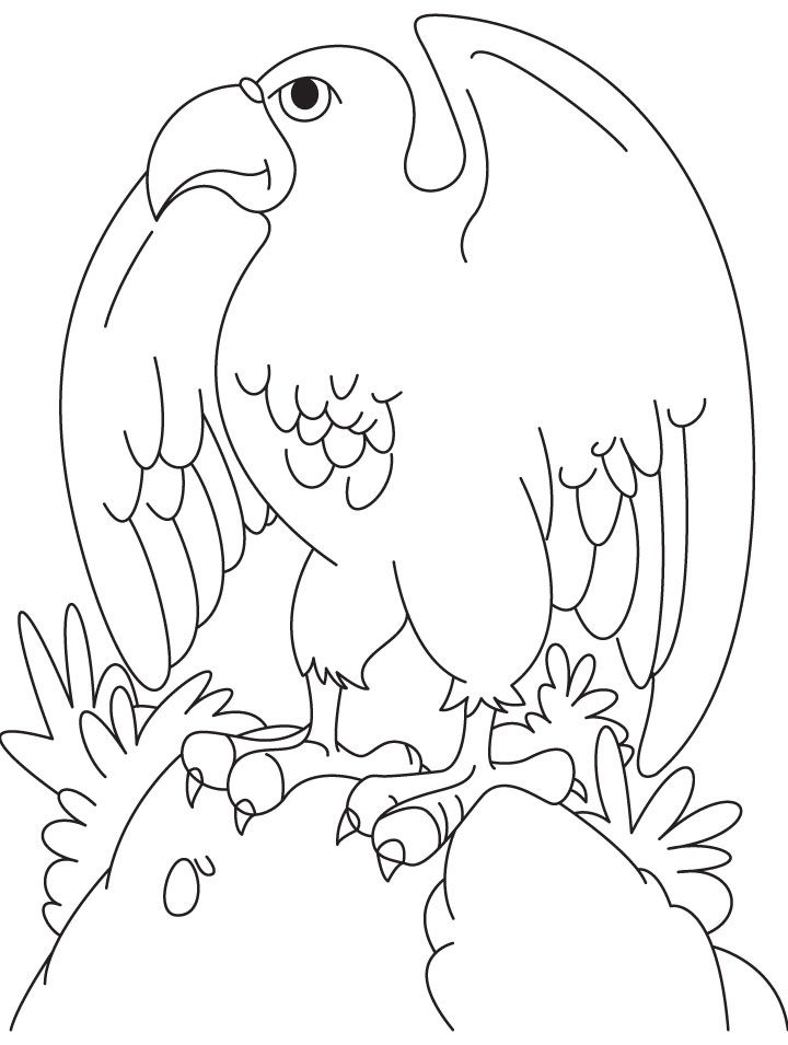 eagle-coloring-page-0022-q1