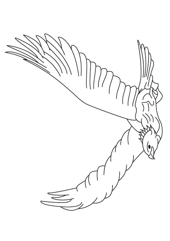 eagle-coloring-page-0023-q2