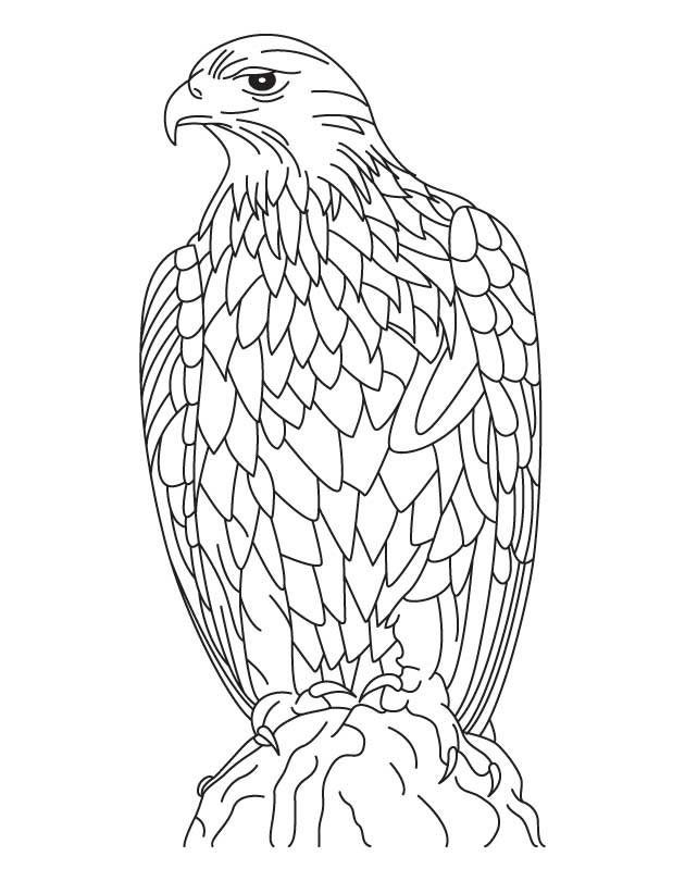 eagle-coloring-page-0028-q1