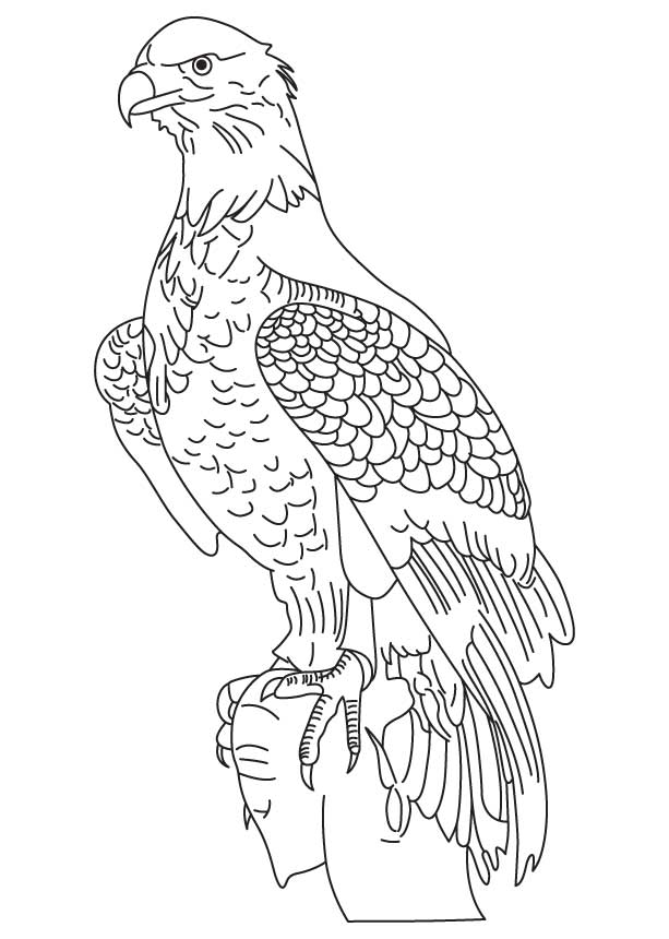 eagle-coloring-page-0030-q1