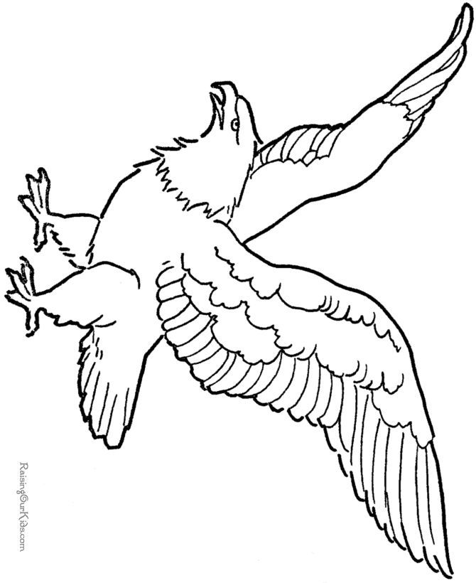 eagle-coloring-page-0031-q1